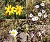 Beautiful wild flowers in the surrounding high Andean meadows