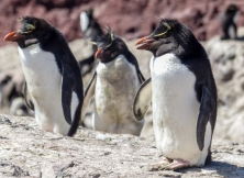Becca's favourite - the funky Rockhopper Penguin