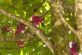 Spot the hummingbird...