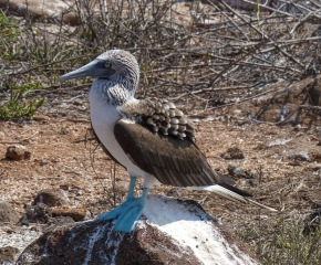You have to smile at a Blue-footed Booby