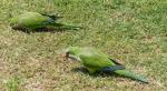 37-YVD bird blog-October 25, 2014